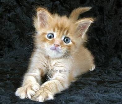 παραξενο αστειο γατακι