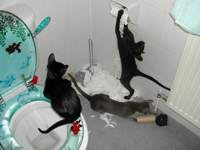 γατακια παιζουν