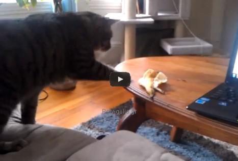 Αστείο video: Γάτα - Μπανανόφλουδα, 0-1