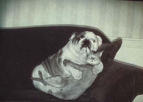 Αστεία εικόνα: Απαγορευμένος έρωτας σκύλου & γάτας