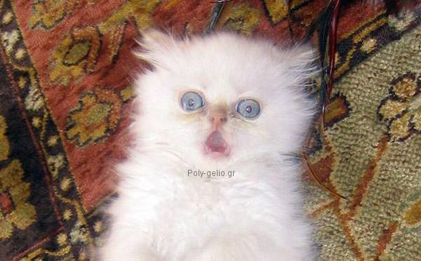 τρομαγμενο γατακι