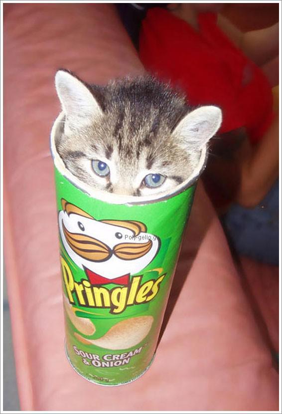 αστείες εικόνες με γατάκια