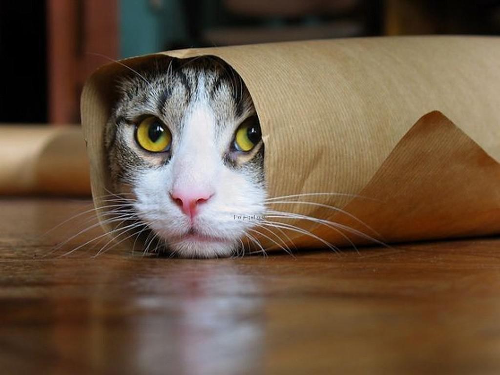 ατσεια εικονα με γατακι