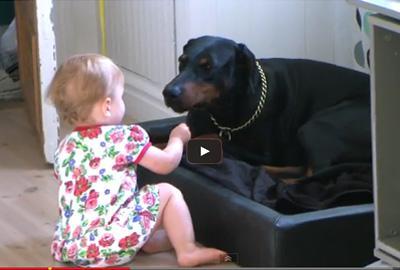 Αστείο βίντεο: Όταν ένα μωρό παίζει με τον σκύλο του!