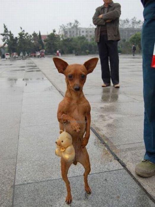 αστεια φωτογραφια με σκυλο