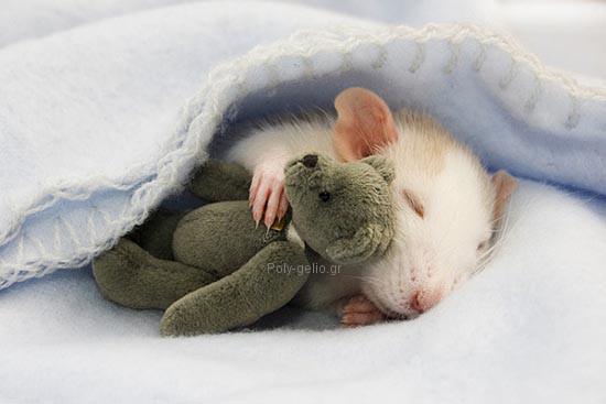 αστεια εικονα με ποντικακι