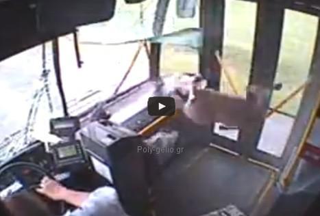 Ελάφι περνάει μέσα από το παρμπρίζ λεωφορείου