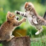 Αστεία βίντεο με γατάκια