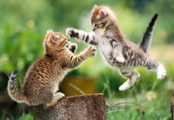 αστεια εικονα με γατες