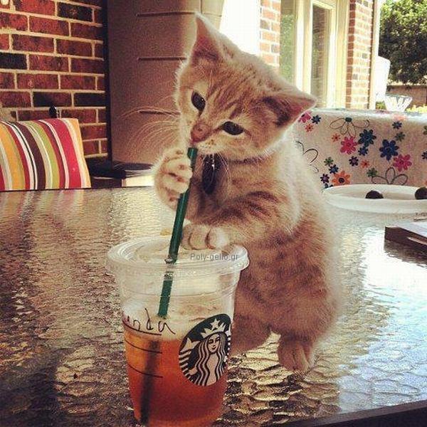 γατακι πινει με καλαμακι