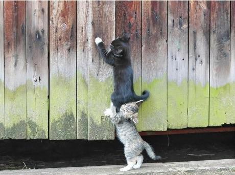αστείες εικόνες με γάτες