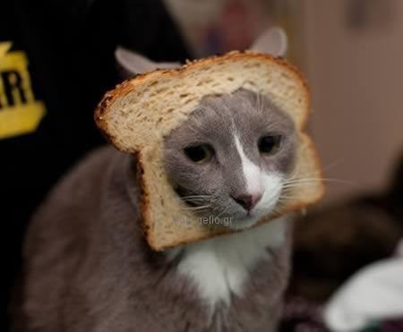 αστεία εικόνα με γάτα