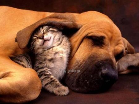 αστεια γατα με σκυλο