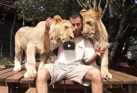 Τα τρυφερά λιοντάρια