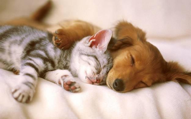 γατα με σκυλο