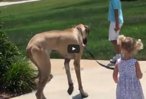 Αστείο βίντεο: Σκύλος πάει βόλτα κοριτσάκι