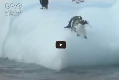 Αστεία βίντεο με διάφορα Ζώα