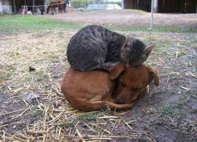 γατα κοιμαται σε σκύλο