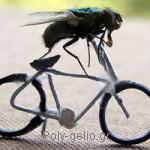 Σόκιν ανέκδοτο: Το Γυφτάκι και η μύγα