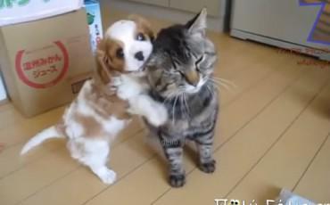 Αστεία βίντεο με σκύλους και γάτες