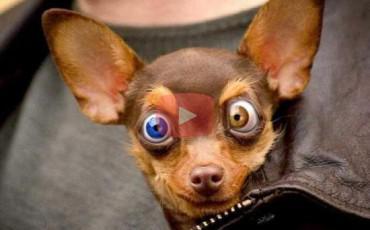 Ζώα Κάφροι [Video]