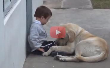 Ο πιο γλυκός σκύλος του κόσμου