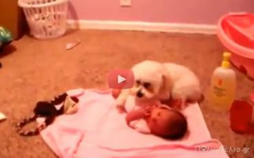 Βιντεο: Σκυλάκια κάνουν babysitting και bodyguarding
