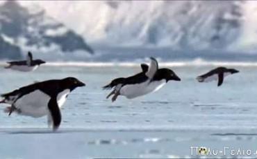 Πρωταπριλιάτικη Φάρσα του BBC [Πιγκουίνοι που πετάνε]