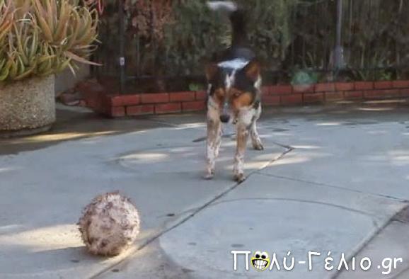 Απολαύστε στο παρακάτω βίντεο έναν σκύλο που υπακούει σε κάθε εντολή! Δεν φαντάζεστε πόσο έξυπνος είναι...