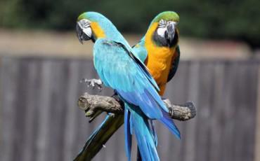 Παπαγάλοι που μιλούν Ελληνικά