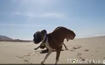 Video: Σκύλος με δύο πόδια τρέχει και παίζει στην παραλία