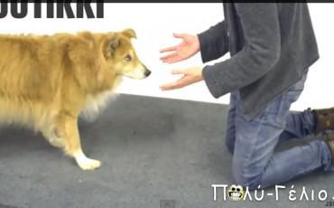 Σκύλοι που φρικάρουν σε μαγικά κόλπα [video]
