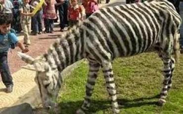 Ανέκδοτο: Ο Γάιδαρος και το Άλογο