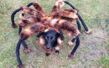 Τρελή Φάρσα με Σκυλο-Αράχνη [Βίντεο]