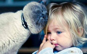 Γάτος σώζει Παιδί από επίθεση Σκύλου !!!
