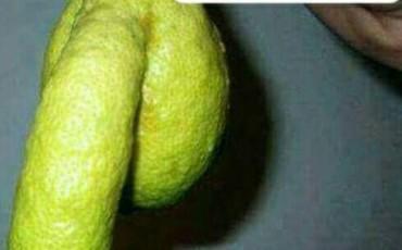 Μη κατουράτε τις Λεμονιές ρε...