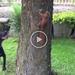 Viral Video: Σκίουρος «εμ-παίζει» τον σκύλο