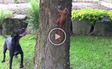 Viral Video: Σκίουρος «εμ-παίζει» με τον σκύλο