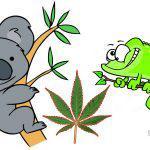 Καμένο ανέκδοτο: Είναι η σαύρα και κάθεται μαζί με το κοάλα στο δάσος και κάνουν μπάφους…..