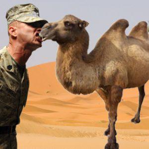 ΑΝΕΚΔΟΤΑΡΑ: Ο νέος διοικητής και η καμήλα......